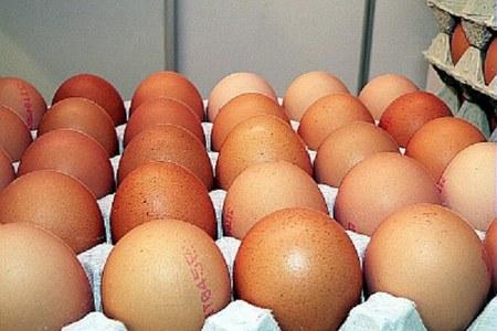 Produzioni animali: misure eccezionali di sostegno del mercato avicolo
