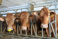 Settore ammasso privato carni bovine, presentazione della domanda di aiuto