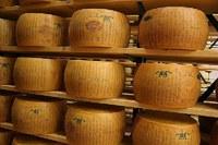 Settore ammasso privato formaggi, presentazione della domanda di aiuto