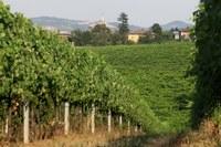 Dichiarazioni vitivinicole Campagna 2020-2021: proroga della dichiarazione di vendemmia