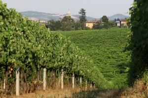 Dichiarazioni vitivinicole di vendemmia e produzione Campagna 2020-2021