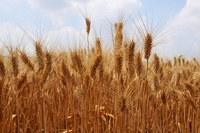 Domanda unica e Regime piccoli agricoltori 2021